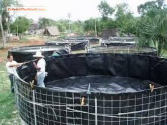 Fish breeding tanks tanques para cria de peces camarones for Cria de pescado en estanques