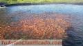 FISH BREEDING TANKS/ TANQUES PARA CRIA DE PECES /CAMARONES
