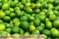 se-vende-limon-tahiti-o-persa-2.jpg