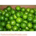 se-vende-limon-tahiti-o-persa-3.jpg